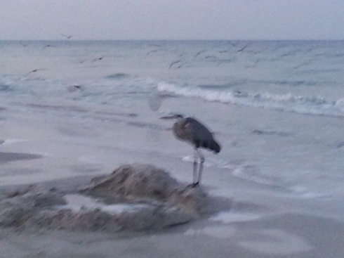 a blurry heron
