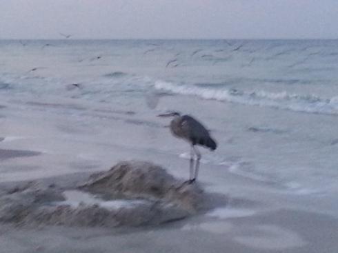 a blurry heron