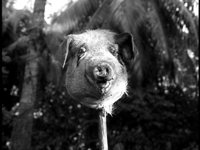 pig-head5
