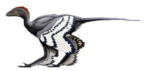 Anchiornis_532c